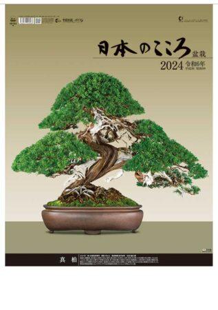 日本のこころ(盆栽)