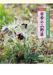 日本の山野草表紙